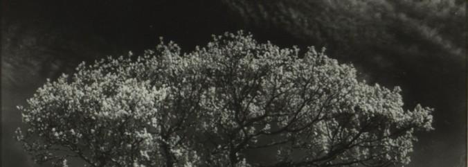 cropped-f-bourke-hawthorn-connemara.jpg