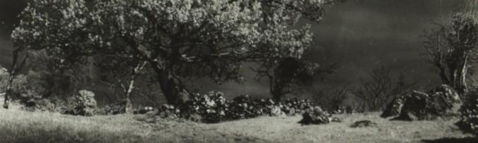 cropped-f-bourke-hawthorn-connemara1.jpg
