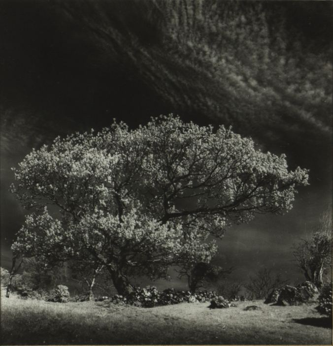Fergus Bourke: Hawthorn Tree, Connemara